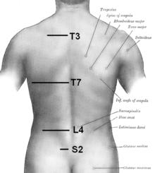 curvatura de la columna